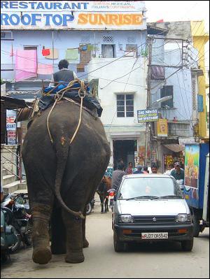 Udaipur elephant