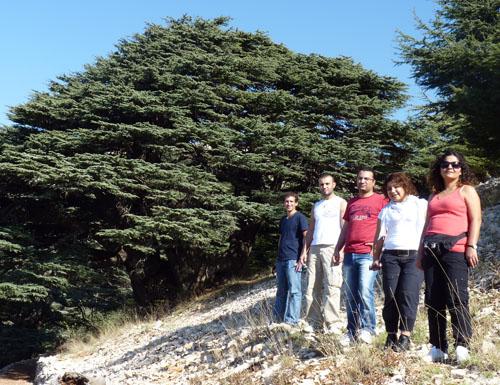 Cedar Forest, Lebanon