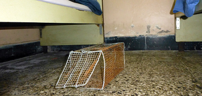 Mouse Trap at the Sheel Hotel in Mumbai