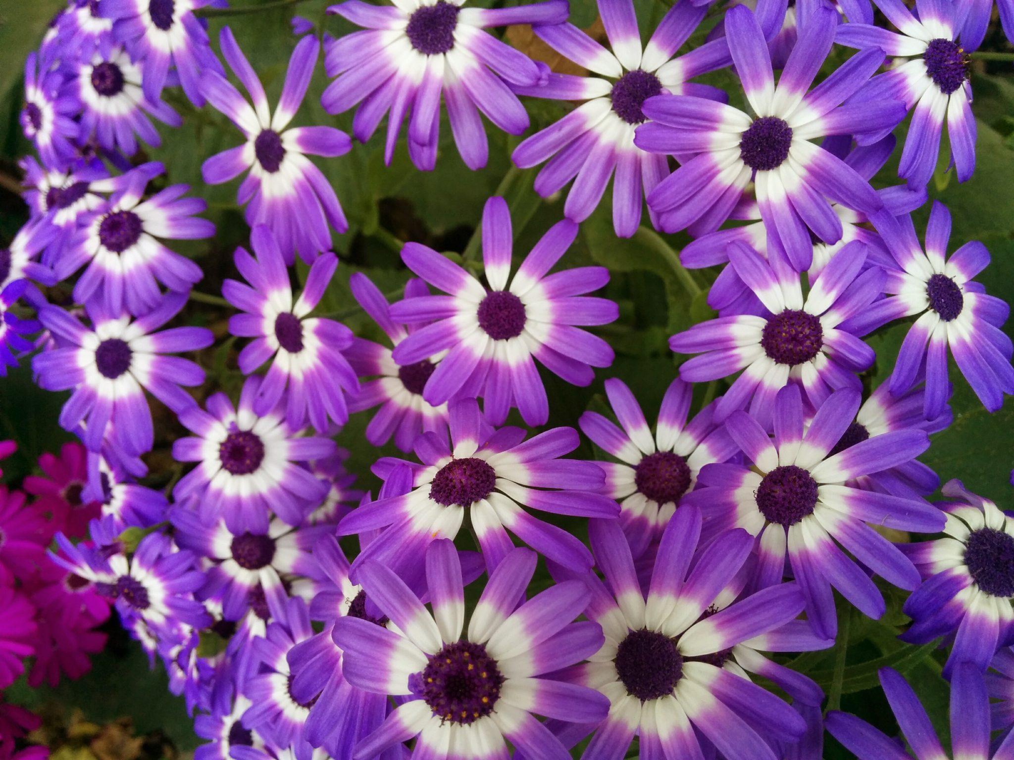 Romanian visa - flowers