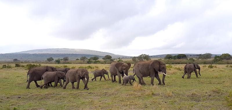 Masai Mara Safari: How to Plan a Budget-Friendly Trip