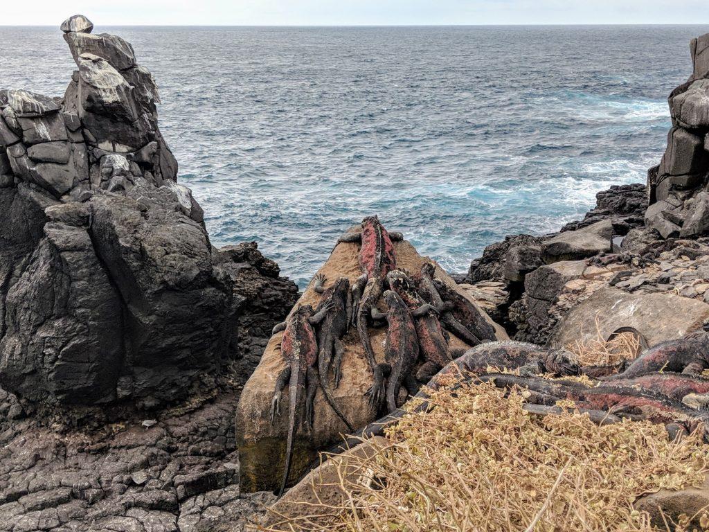 Galapagos Trip - Amazing Iguanas