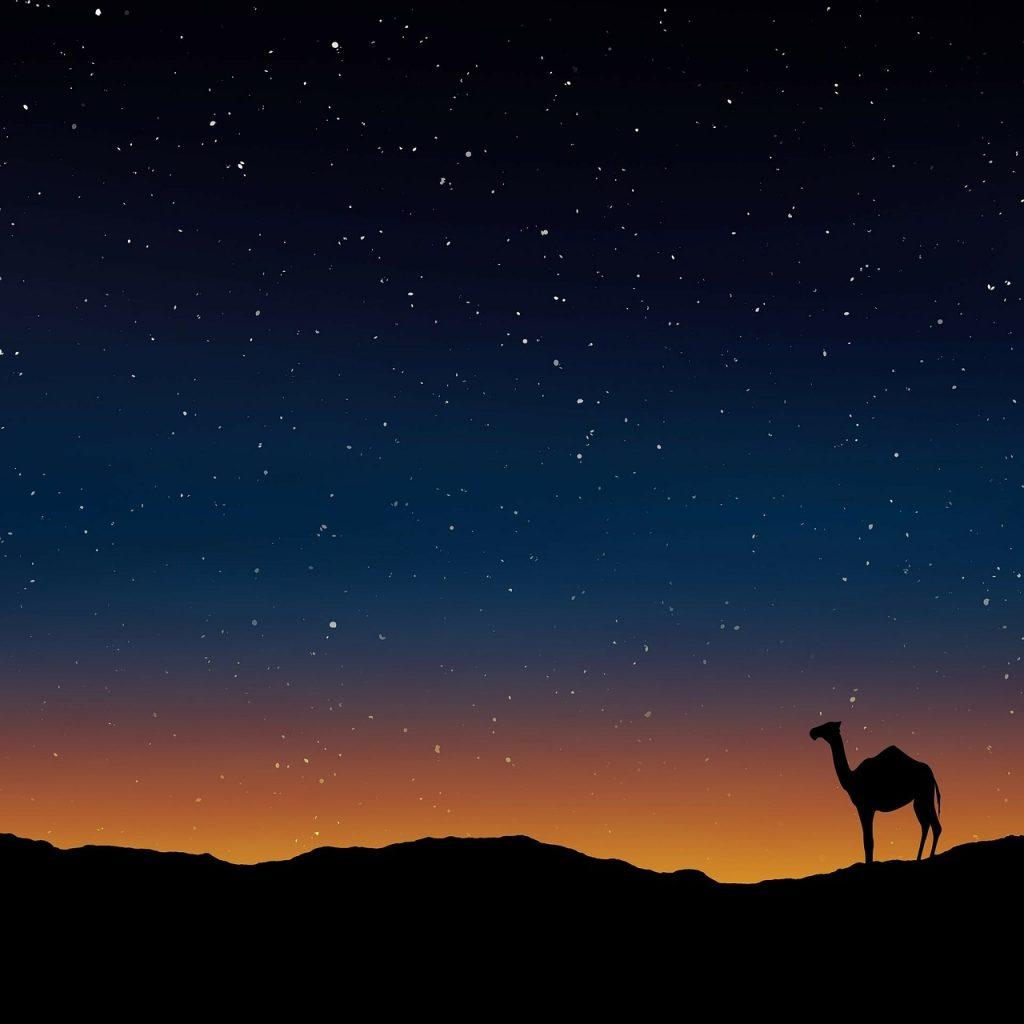 camel-163703_1280-1024x1024 ▷ Cómo preparar tu viaje a Omán