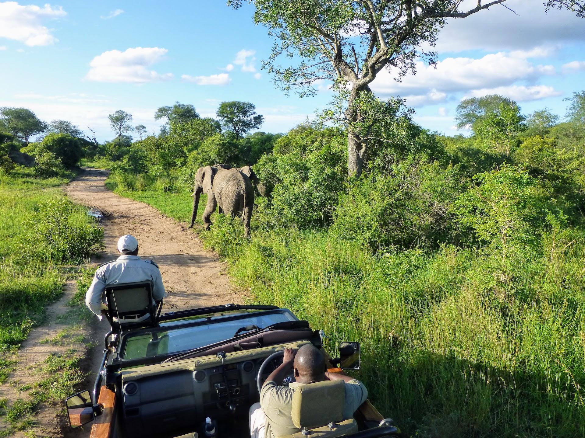 South Africa safari - elephants